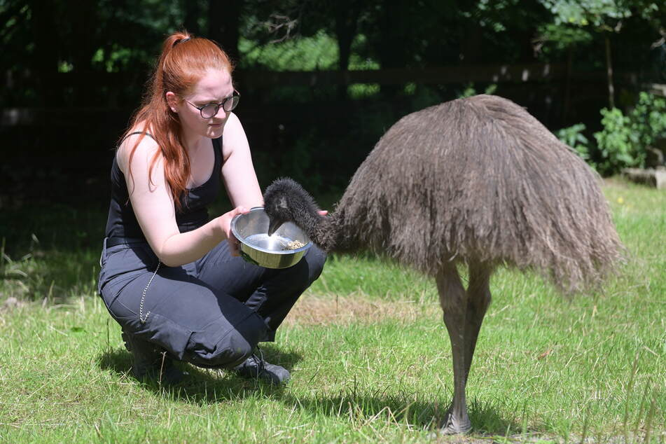Ronja Rössel (21) gibt den Emus Futter.