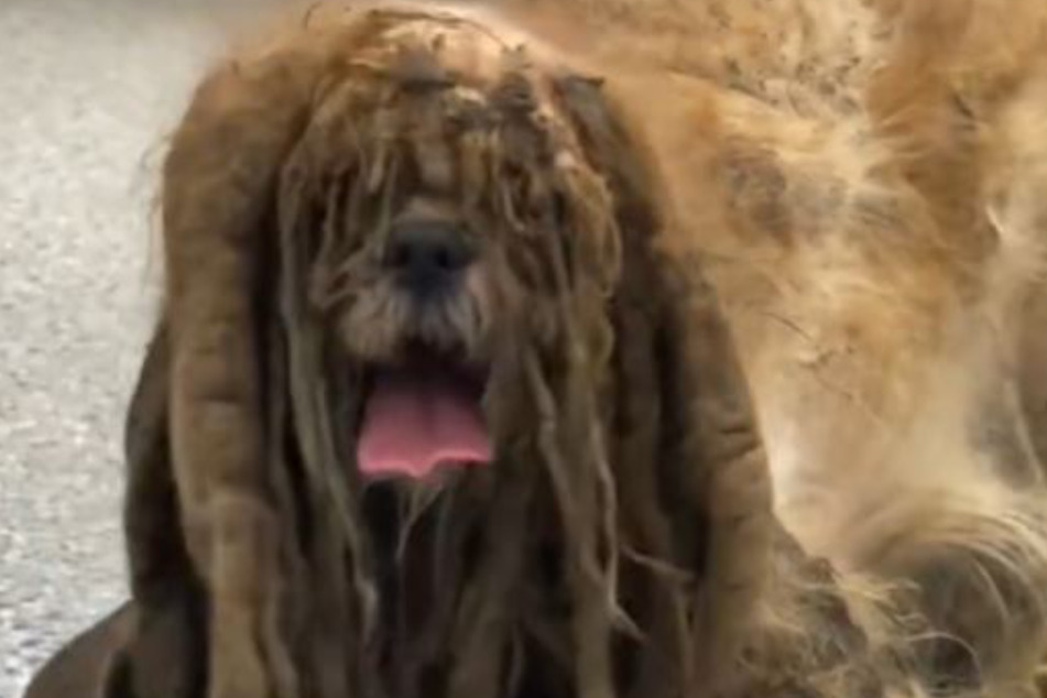 There was a dog under all that hair.