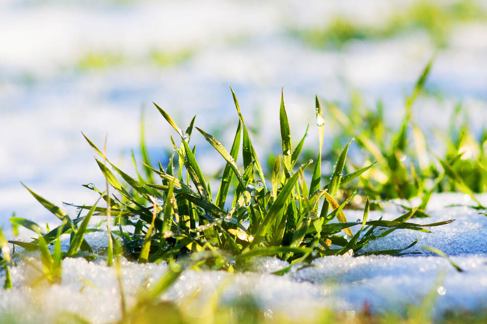 Es taut! Dank milder Temperaturen wird vom Schnee bald nicht mehr viel zu sehen sein. (Symbolbild)