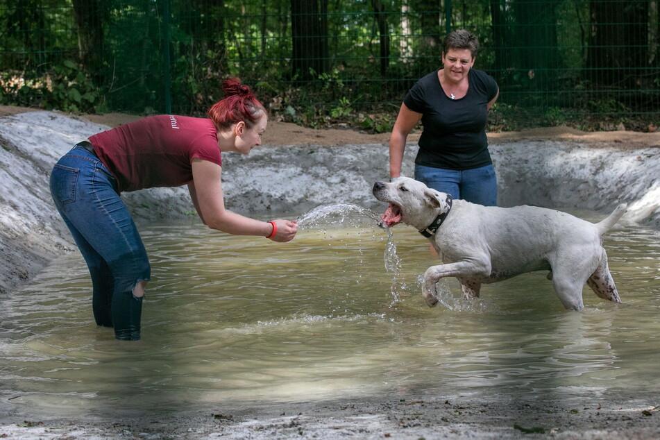 Der fertige Pool wurde von den Vierbeinern im Tierheim sofort ausprobiert.