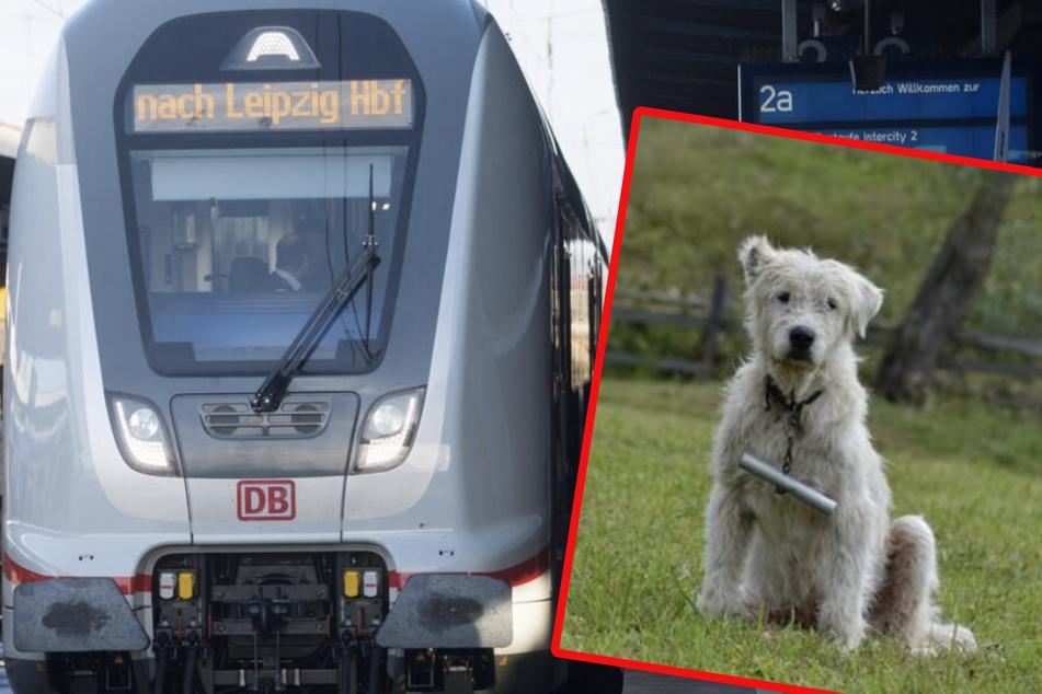 Herrchen geht auf Bahnsteig rauchen, Hund und Gepäck fahren im Zug weiter nach Leipzig