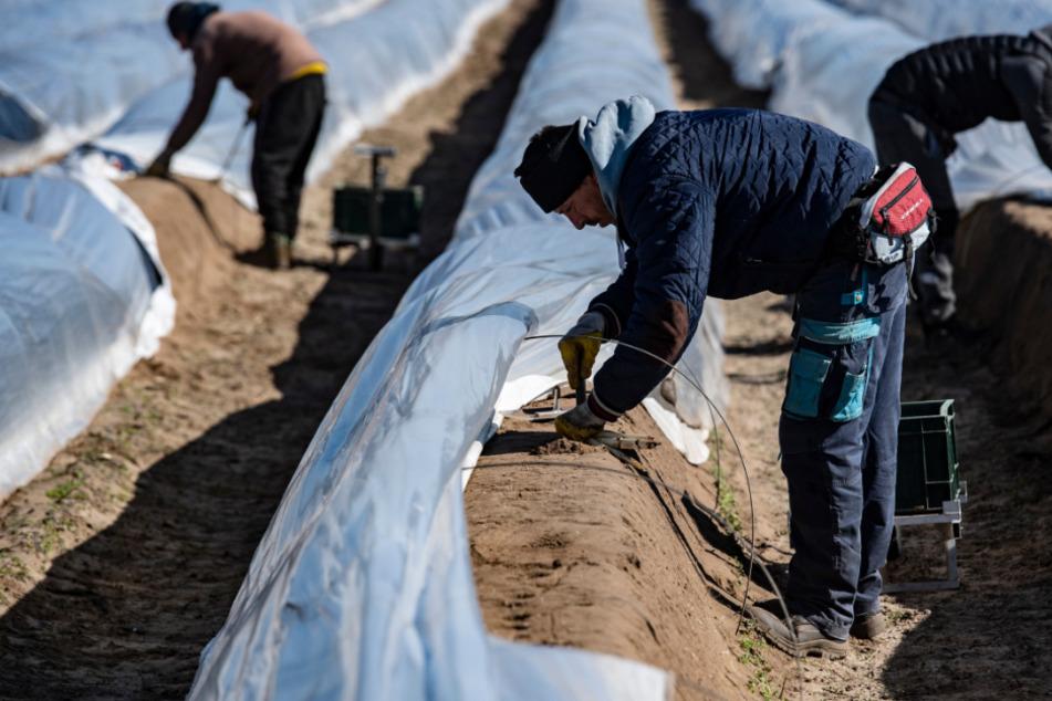 In Baden-Württemberg sollen Flüchtlinge die Landwirte bei der Aussaat und Ernte unterstützen. (Symbolbild)