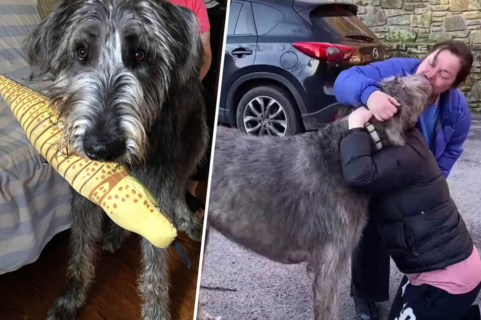 Dog goes missing after car crash, but his family refuses to give up hope