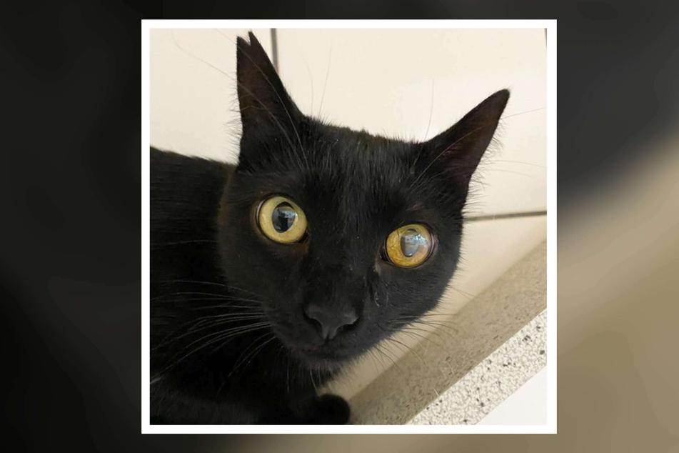 """Katze """"Una"""" landete kurz nach ihrer Adoption wieder im Tierheim. Ihre kurzzeitige Besitzerin nannte irritierende Gründe für die Abgabe."""