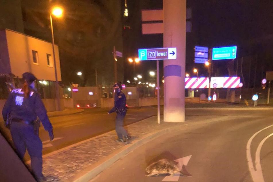 Als sich der Biber auf den Weg zur Autobahn machte, griffen die Polizisten ein.