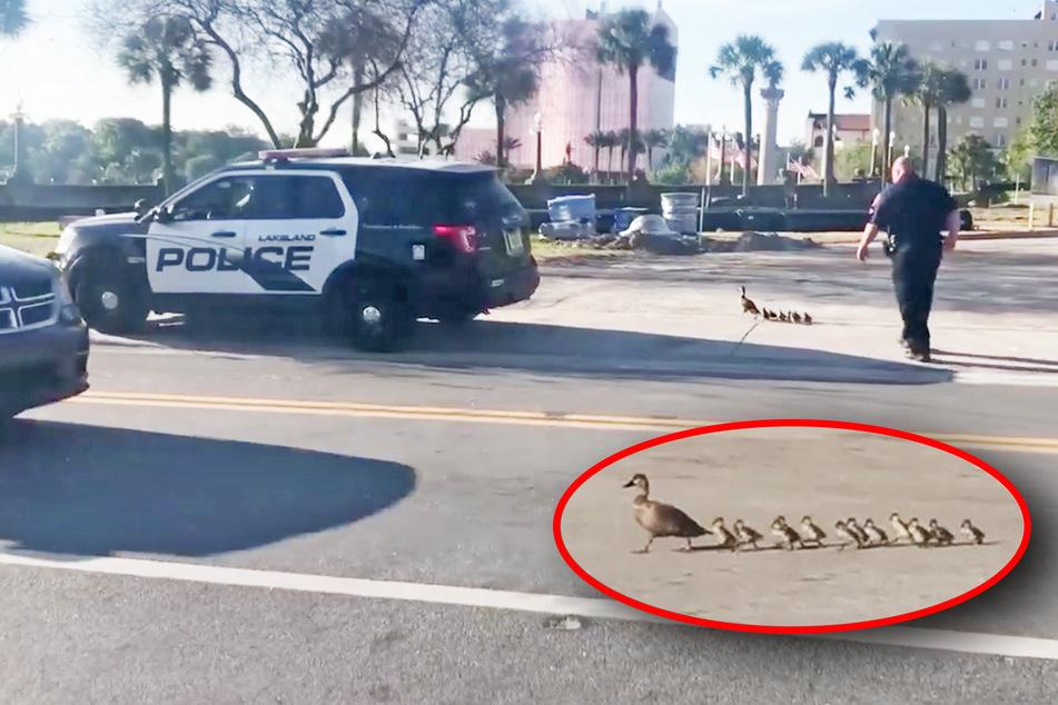 Außergewöhnlicher Einsatz: Polizei eskortiert ganze Enten-Familie