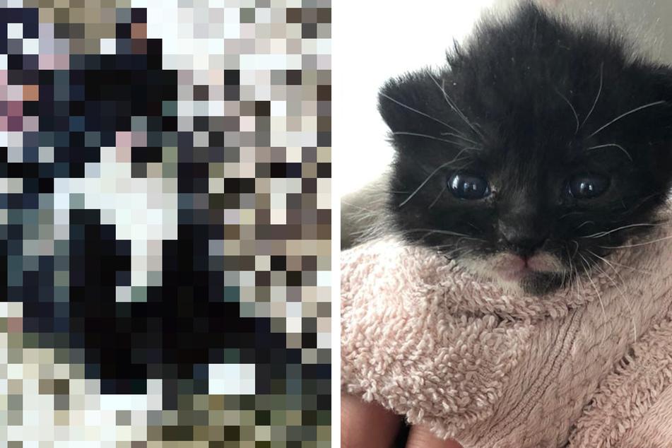 Mann rettete Katzenbaby durch Kaiserschnitt: So süß ist der kleine Garfield heute