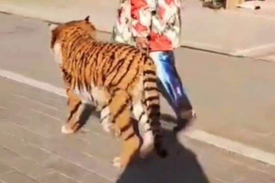 Ist hier etwa ein Tiger auf offener Straße unterwegs?