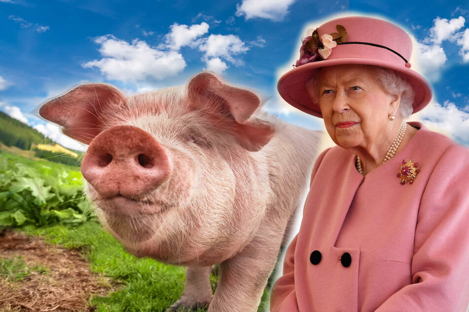The Queen will announce a new bill that legally recognizes animals' ability to feel pain