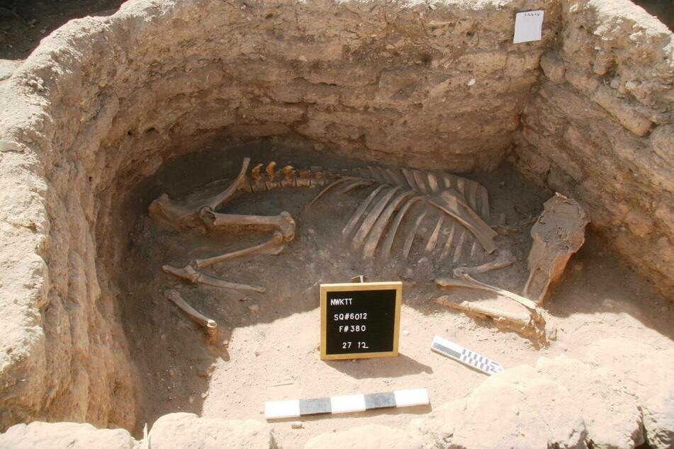 Animal skeletons of cows and bulls were found inside one of the rooms.