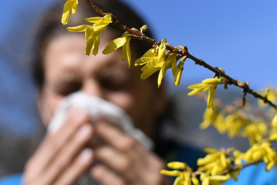 Taschentücher bereithalten! Für Pollenallergiker brechen schwere Zeiten an