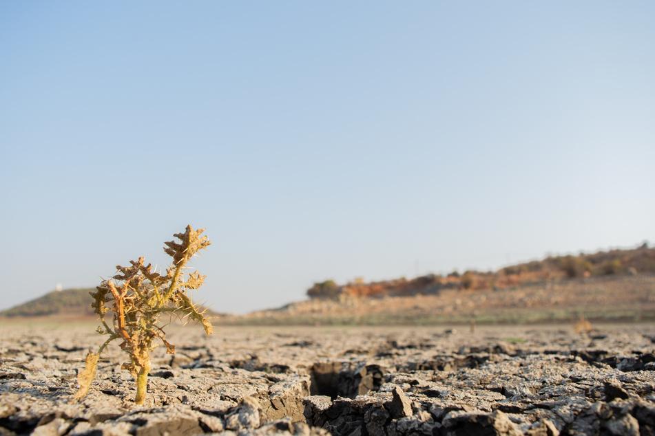 Lange Dürreperioden können eine Folge des Klimawandels sein. (Symbolbild)