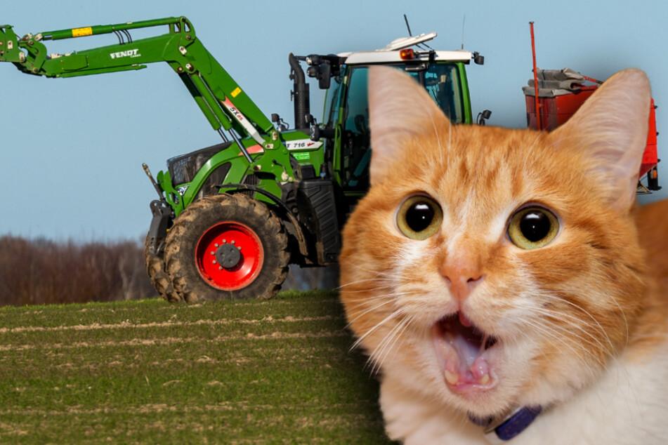 Katze und Traktor legen Internet und Telefon in Ort lahm