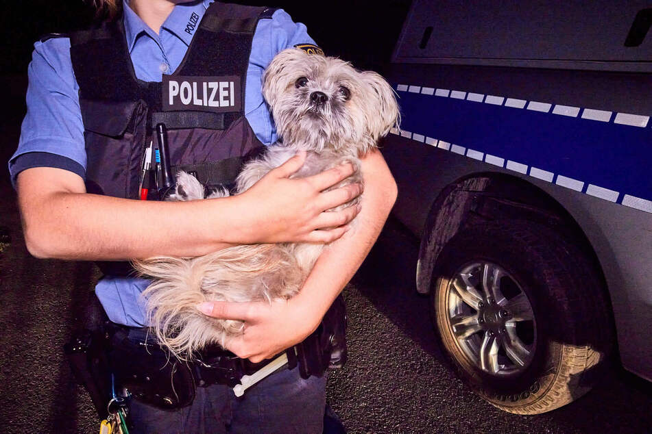 Auch dieses Hündchen war in die Jagd involviert: Der kleine Vierbeiner gehörte offenbar dem Paar, das vor der Polizei flüchtete und befindet sich nun vorerst im Tierheim.