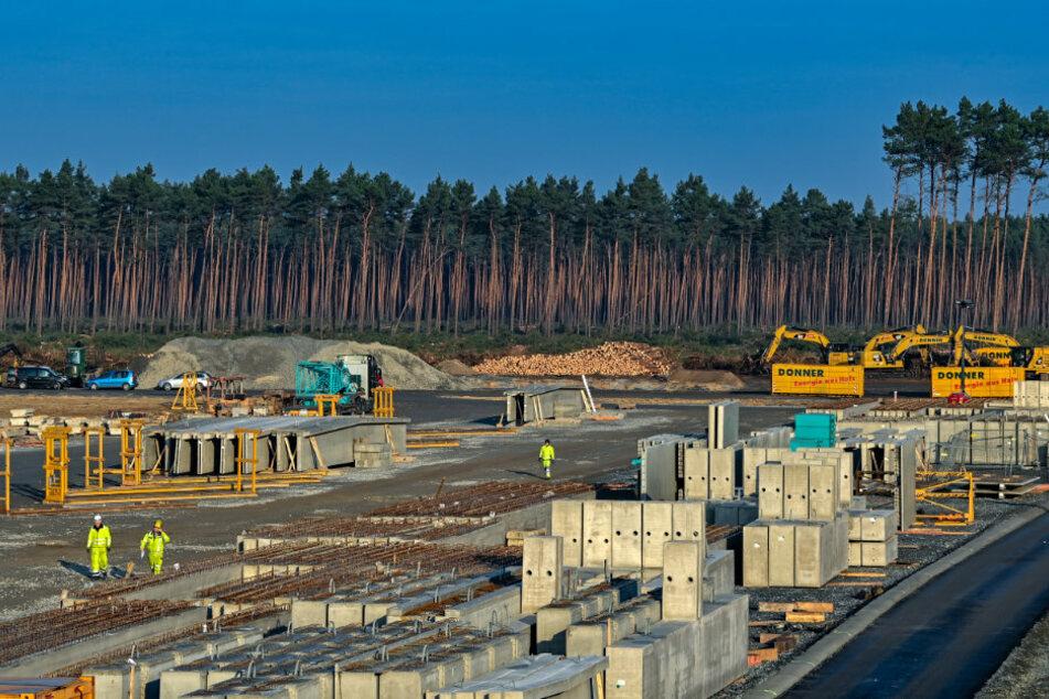 Gericht erlaubt weitere Waldrodung für Tesla-Fabrik in Grünheide