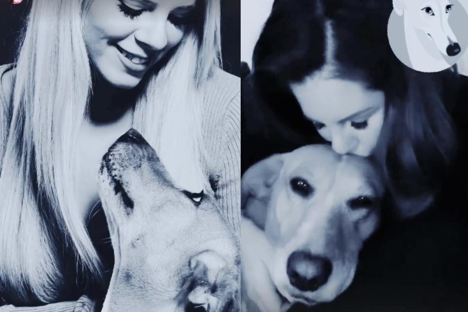 Fans besorgt: So geht es Jenny Frankhauser nach dem Tod von Hündin Priscilla