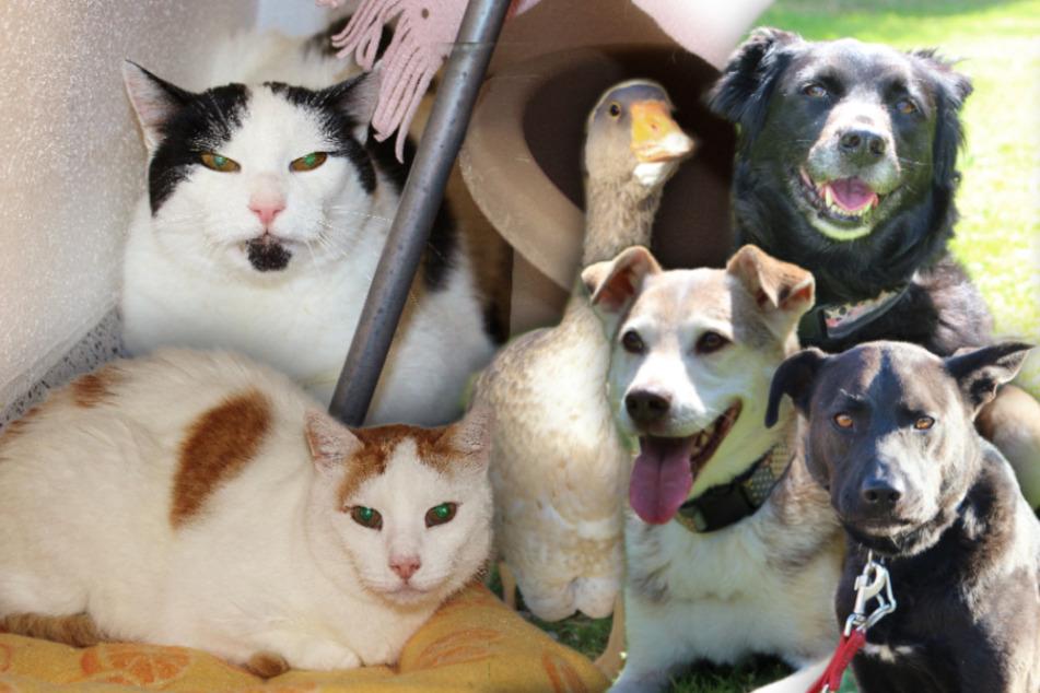 6 besondere Tiere: Diese Hunde, Katzen und eine Gans suchen ein Zuhause