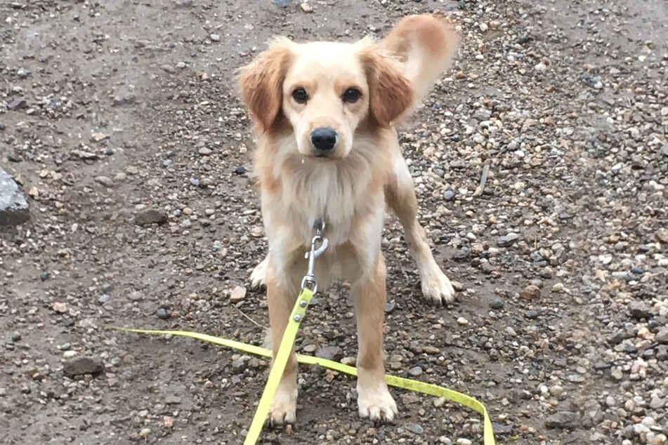 """The dog was described as """"quite dry and clean"""" - not typical characteristics for strays."""