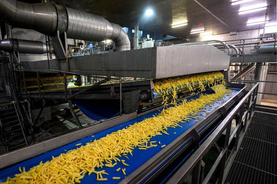 Kartoffeln werden in einer Fabrik zu Pommes frites verarbeitet. Fritten sind in Belgien so etwas wie in Deutschland Sauerkraut, Brat- und Currywurst und Döner zusammen: ein identitätsstiftendes Nationalgericht.