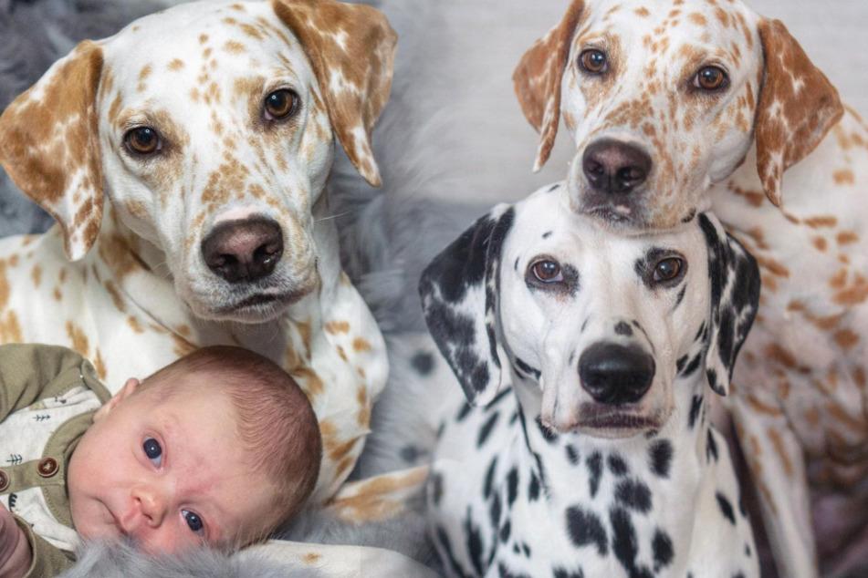 Süßer Nachwuchs bei den Hunde-Influencern Khaleesi & Django