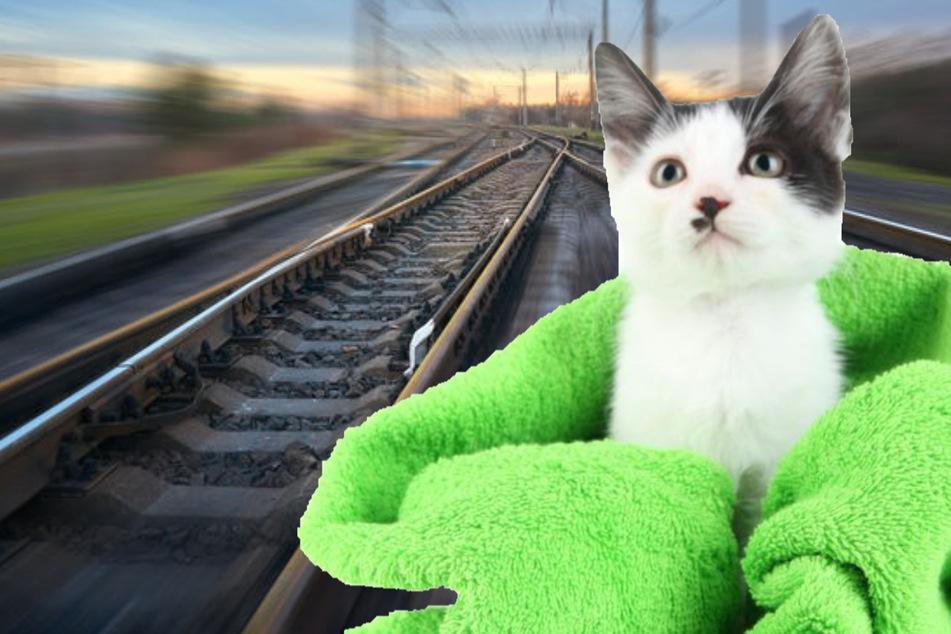 In Exeter soll eine Frau eine Katze, im Handtuch eingepackt, auf die Gleise geworfen haben. (Bildmontage)
