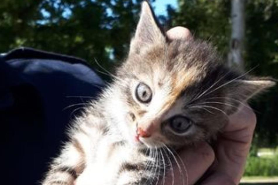 Katzenbaby jammert unter Auto: Feuerwehr muss anrücken