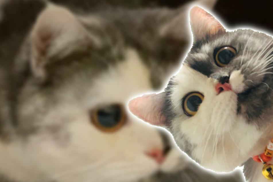 Diese Katze hat nicht nur ein einzigartiges Äußeres, sondern auch spezielle Vorlieben