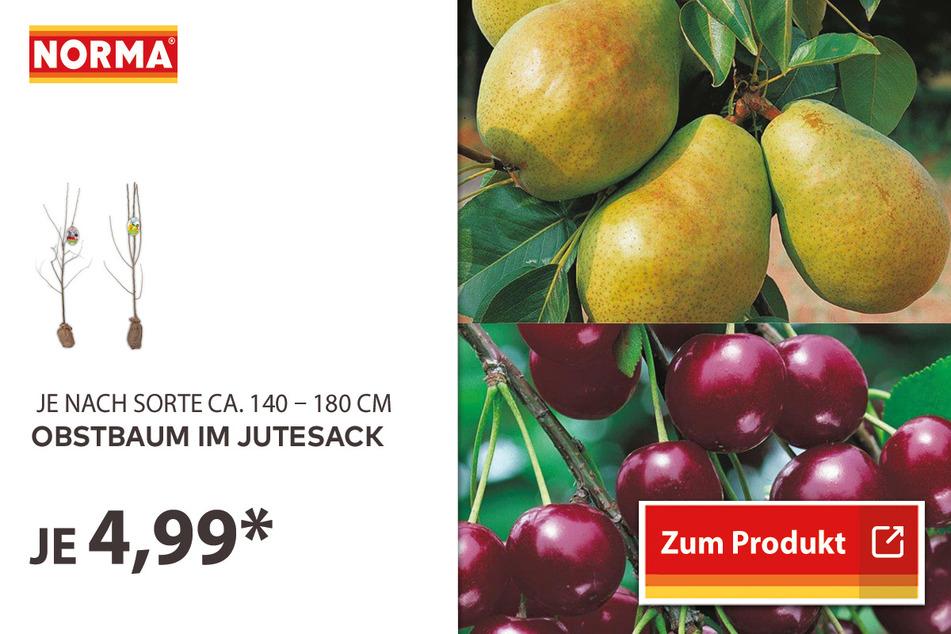 Obstbaum im Jutesack für 4,99 Euro.