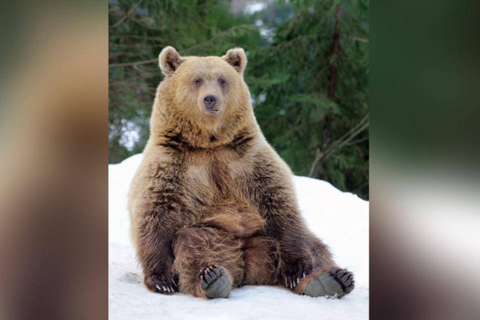 Dass der Grizzlybär eigentlich ein Raubtier ist, war in dem besonderen Moment schnell vergessen. (Symbolbild)