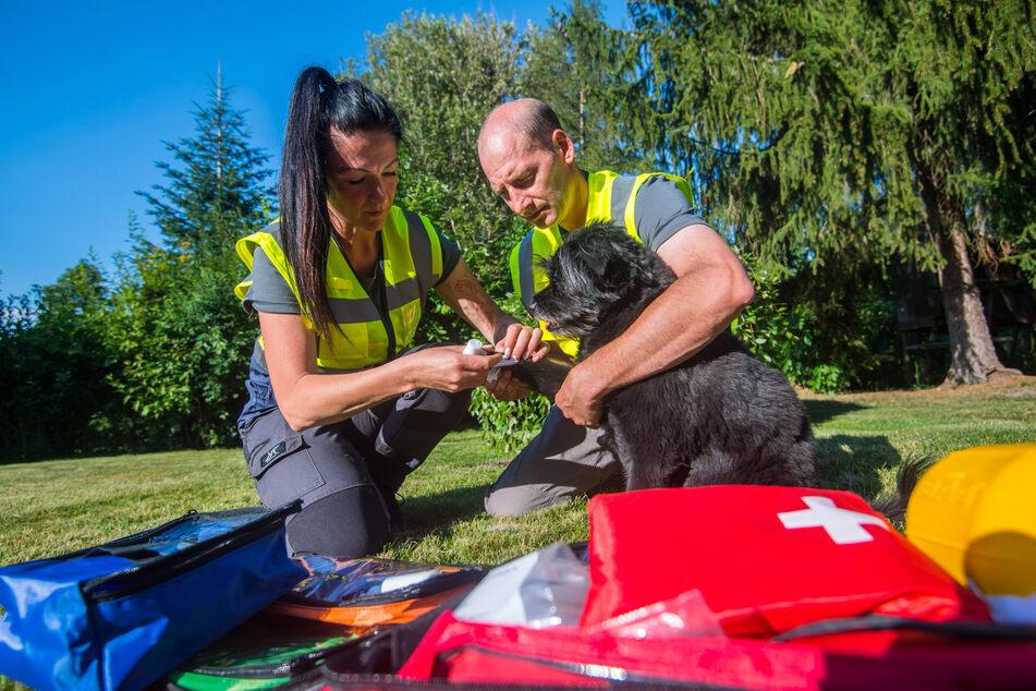 Sandra Kögel (44) und Enrico Lübke (43) legen Mischling Mezzo einen Verband an und bilden sich zu Tierunfall-Sanitätern aus.