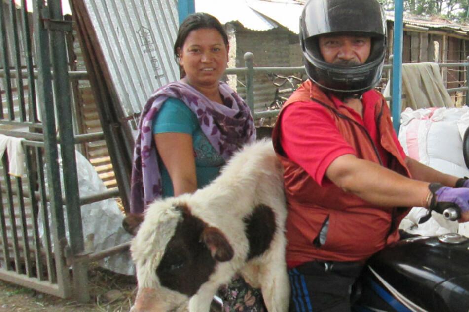 Der Grund, weshalb dieser Mann Kühe auf seinem Motorrad transportiert, rührt zu Tränen