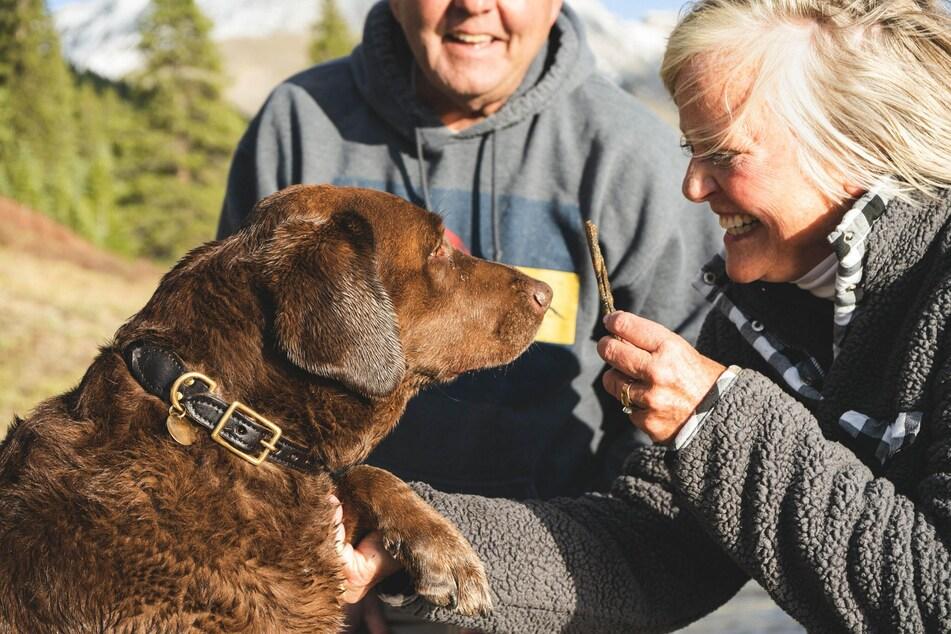 Hunde können auch im Alter noch Kommandos und Tricks lernen.