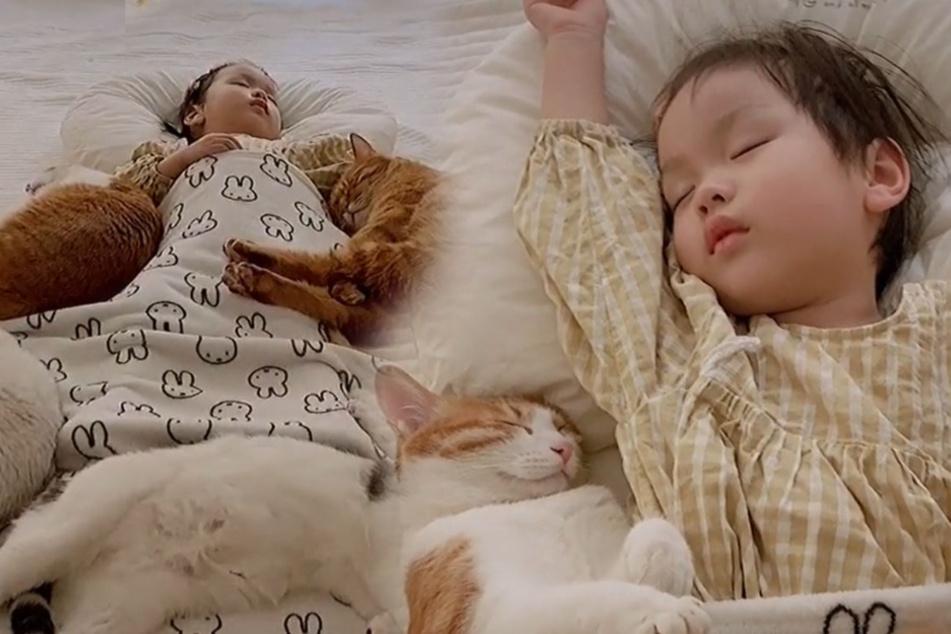 Balsam für die Seele: Alle lieben, was die Katzen hier bei dem Mädchen machen