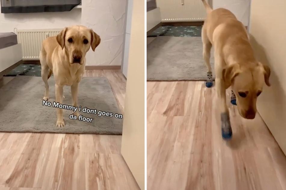 Ohne seine Socken denkt Korey nicht einmal daran, den Boden zu betreten.