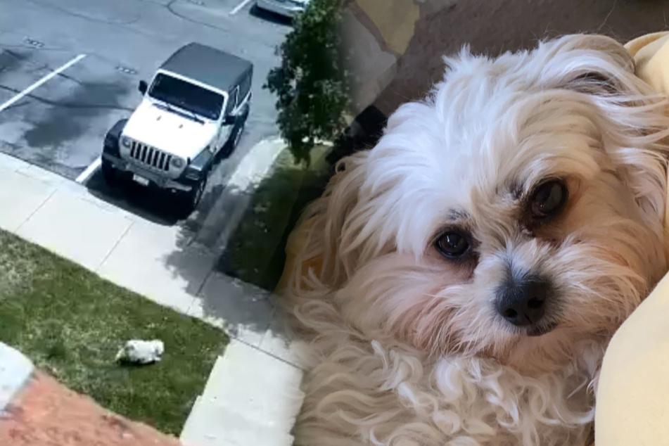 Frau sucht ihren Hund und ist sprachlos, als sie Überwachungs-Video ansieht