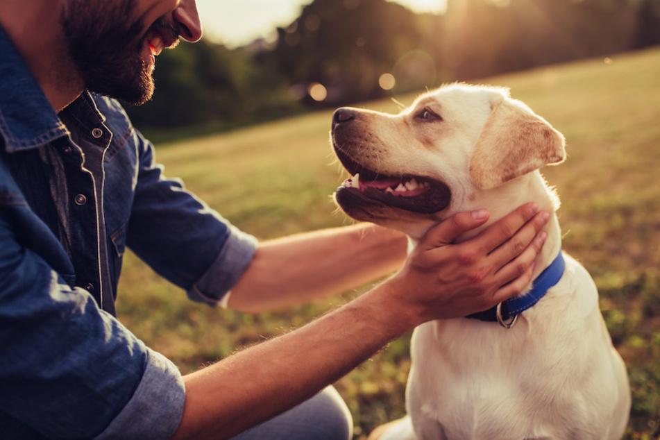 Top Ten: Das ist die beliebteste Hunderasse in Deutschland