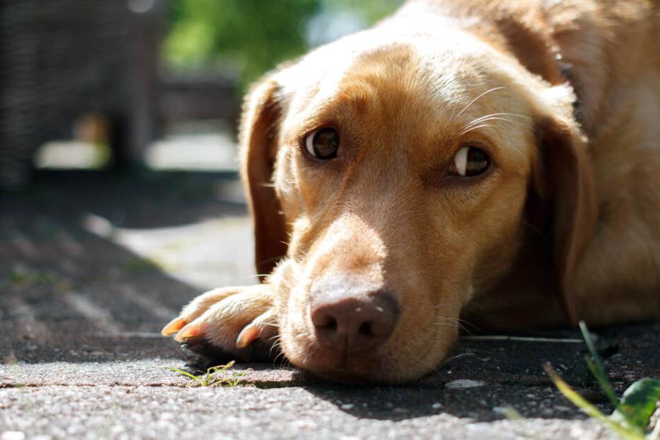 München: Hund in Fußgängerzone misshandelt: So reagieren die Passanten