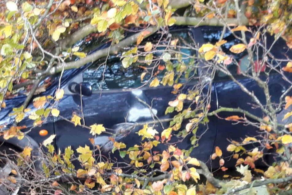 Der geparkte Ford Ka ist von dem Baum begraben worden.