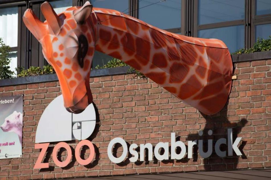 Der Zoo Osnabrück möchte an Halloween seine Besucher erschrecken.