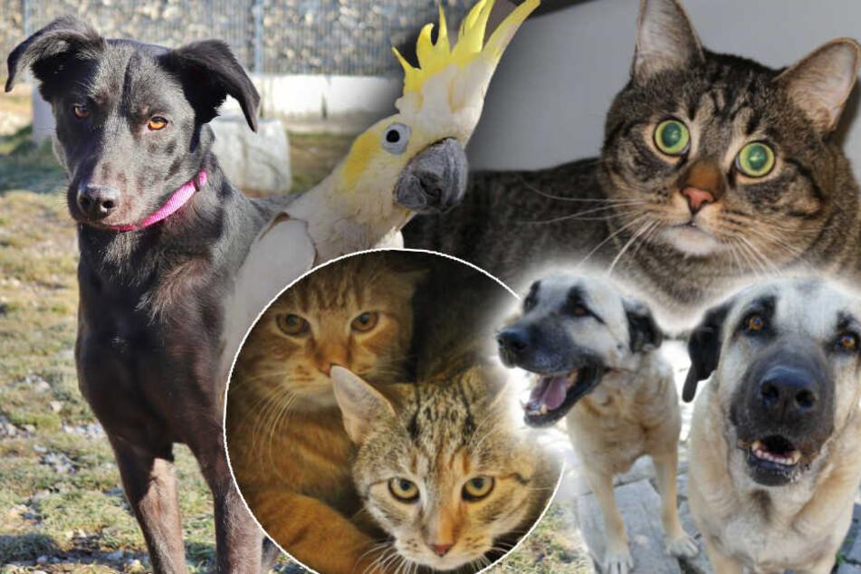 8 besondere Tiere: Warum will niemand diese Hunde und Katzen haben?