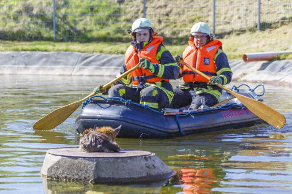 Die Feuerwehr rettete den Fuchs mit einem Schlauchboot.