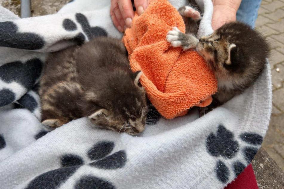 Die vier Katzen-Babys überstanden die Rettungsaktion unbeschadet.