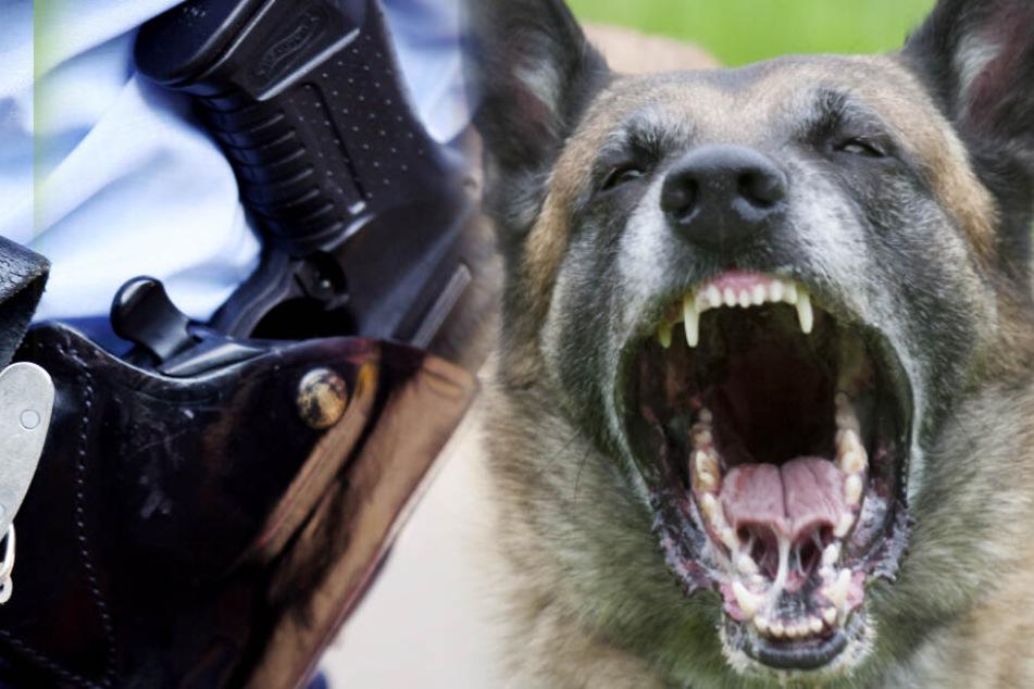 Schäferhund greift Kinder auf Spielplatz an, Polizist rettet sie!