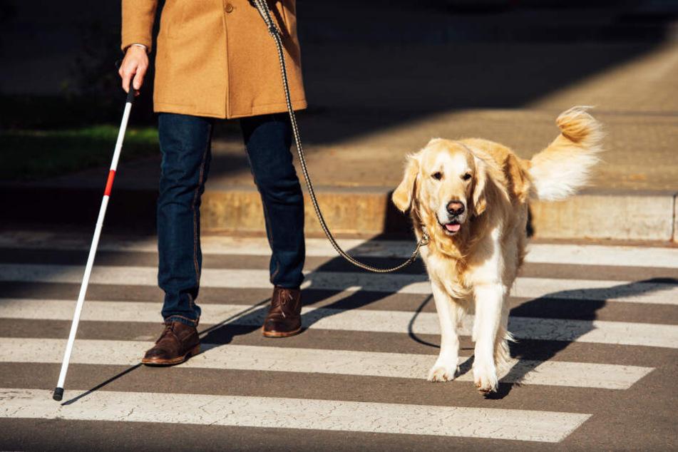 Ein Blindenhund führt jemanden über eine Straße (Symbolbild).