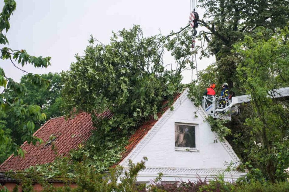 83-Jährige fährt bei Unwetter durch umgestürzten Baum und stirbt