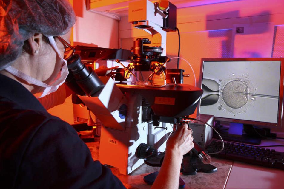 Die Experimente werden in einer Petrischale unter dem Mikroskop  durchgeführt.