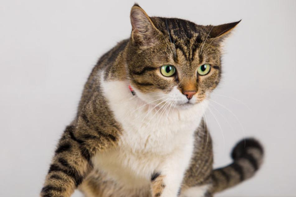 Katzen schleppen eigentlich Mäuse an, doch Katze Kee Kee brachte ganz andere Sachen an. (Symbolbild)