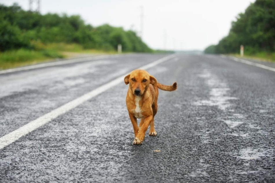Weil ein entlaufener Hund auf die Fahrbahn lief, wurde eine Autobahn gesperrt. (Symbolbild)
