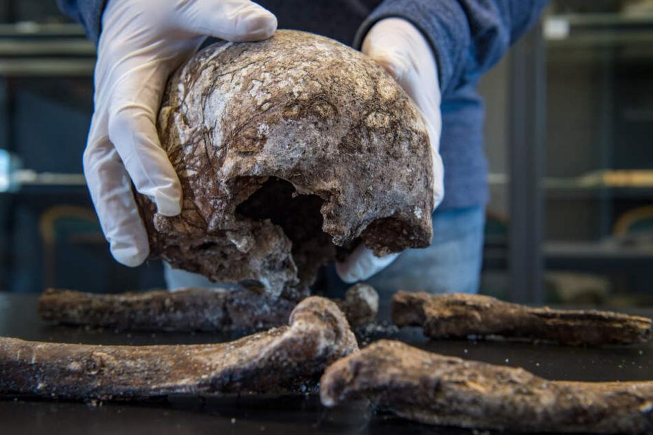 Die sterblichen Überreste werden im Labor zur Alters- und DNA-Bestimmung untersucht und anschließend wieder bestattet.
