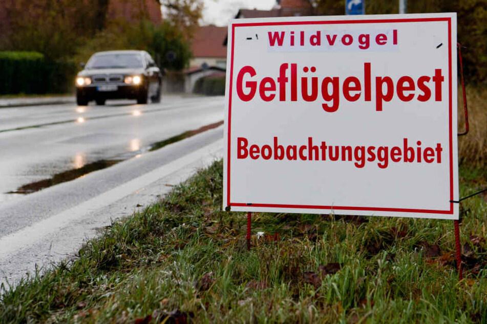 Wegen der Vogelgrippe wurde die Stallpflicht in Erfurt jetzt ausgeweitet.